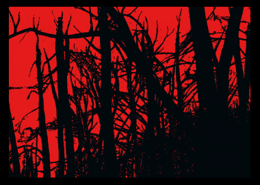 home_novità foresta